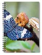 Colorful Butterflies Spiral Notebook