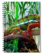 Colorful Chameleon Spiral Notebook