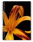 Colorful Curls Spiral Notebook