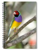 Colorful Gouldian Finch Spiral Notebook