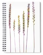 Colorful Grasses  Spiral Notebook