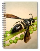 Colorful Hymenop 1 Spiral Notebook