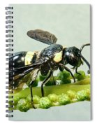 Colorful Hymenop 2 Spiral Notebook