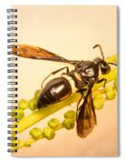 Colorful Hymenop 4 Spiral Notebook