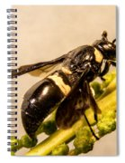 Colorful Hymenop 5 Spiral Notebook