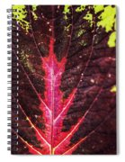 Colorful Leaf By Mother Nature Spiral Notebook