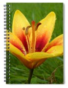 Colorful Lily Dew Drops Spiral Notebook