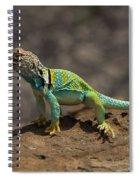 Colorful Lizard Spiral Notebook