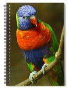 Colorful Lorikeet Spiral Notebook