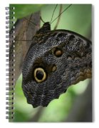 Colorful Markings On A Blue Morpho Butterfly On A Tree Trunk Spiral Notebook