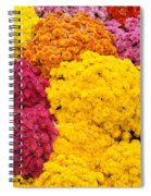 Colorful Mum Flowers Fine Art Abstract Photo Spiral Notebook
