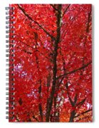 Colorful Red Orange Fall Tree Leaves Art Prints Autumn Spiral Notebook