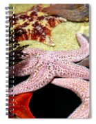 Colorful Starfish Spiral Notebook