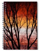 Colorful Tree Branches Spiral Notebook