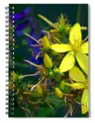 Colorful Wonder Spiral Notebook