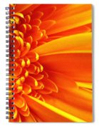 Colors Galore Spiral Notebook