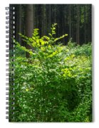 Colors Of A Forest In Vogelsberg Spiral Notebook