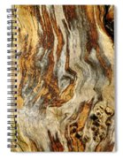 Colors Of Bark Spiral Notebook