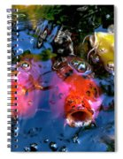 Colors Of Koi Spiral Notebook