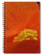 Colors Of The Sun Spiral Notebook