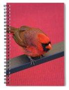Colour Me Red - Northern Cardinal - Cardinalis Cardinalis Spiral Notebook