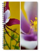 Colourful Colombine Spiral Notebook