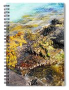 Colourful Sea Life - Fishers Point Spiral Notebook