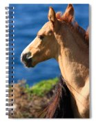 Colt By The Sea Spiral Notebook