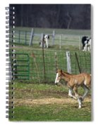Colt Play With Hay Spiral Notebook