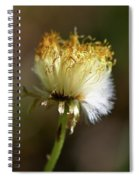 Coltsfoot Bad Hair Day 1 Spiral Notebook