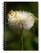 Coltsfoot Bad Hair Day 3 Spiral Notebook