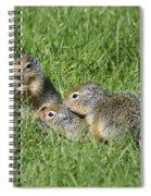 Columbian Ground Squirrels Spiral Notebook