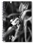 Columbine Flower 2 Black And White Spiral Notebook