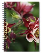 Columbine In Spring Spiral Notebook