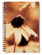 Comfortably Perched - Gold Glow Spiral Notebook