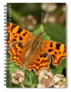 Comma Butterfly Spiral Notebook