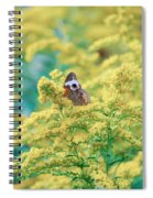 Common Buckeye Butterfly Hides In The Goldenrod Spiral Notebook