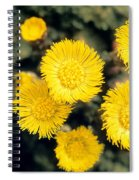 Common Coltsfoot  Spiral Notebook
