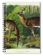 Common Deer Spiral Notebook