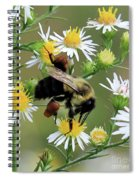 Common Eastern Bumblebee  Spiral Notebook