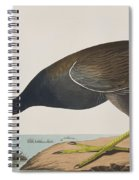 Common Gallinule Spiral Notebook