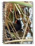 Common Gallinule Spiral Notebook
