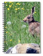 Common Hare Spiral Notebook