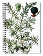 common juniper, Juniperus communis Spiral Notebook