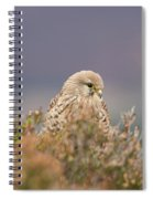 Common Kestrel Falco Tinnuculus Perched On Rock Spiral Notebook