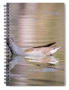 Common Moorhen Spiral Notebook