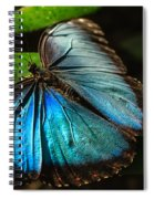 Common Morpho Blue Butterfly Spiral Notebook
