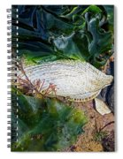 Common Piddock - Pholas Dactylus Spiral Notebook