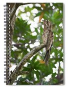 Common Potoo Costa Rica Spiral Notebook