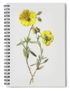 Common Rock Rose Spiral Notebook